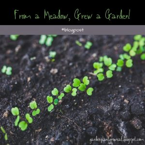 From a Meadow, Grew a Garden Blog Post Cover Image GardenPlantGrowEat